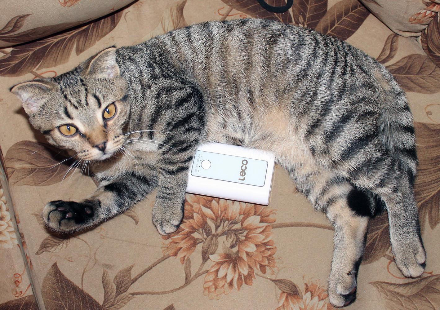 смарт-кот