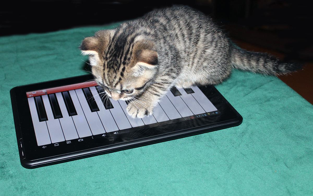 Мой новый котЭ