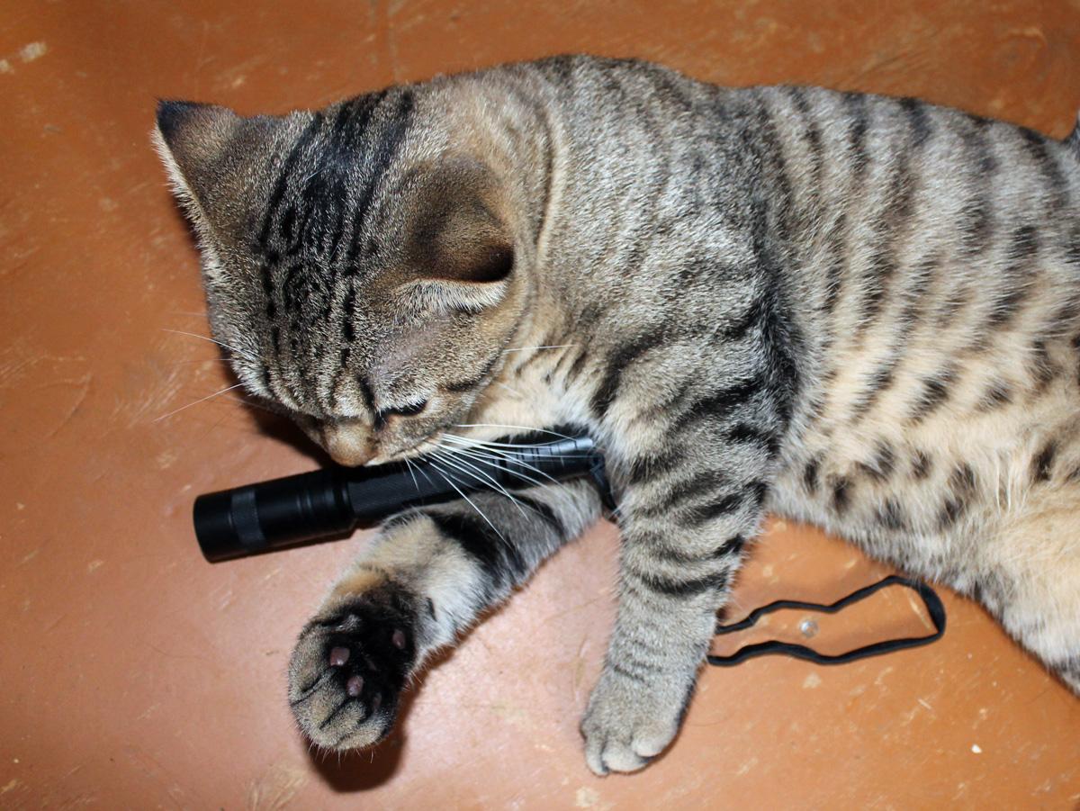 E25_cats